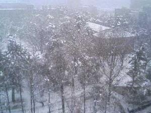 雪の中央公園
