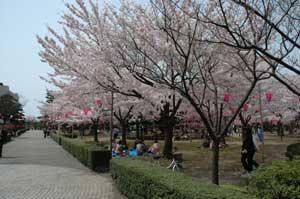 芦城公園1